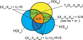 Venn diagram illustrating Temporal information partitioning: Characterizing synergy, uniqueness, and redundancy in interacting environmental variables